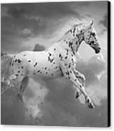 Leopard Appaloosa Cloud Runner Canvas Print by Renee Forth-Fukumoto