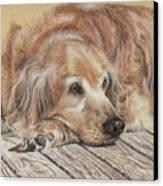 Lexie Canvas Print by Terry Kirkland Cook