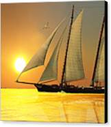 Light Of Life Canvas Print by Corey Ford