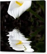 Lily Reflection Canvas Print by Avalon Fine Art Photography