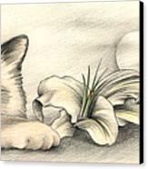 Lily The Birman Canvas Print by Johanna Pieterman
