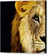 Lion Art - Face Off Canvas Print by Sharon Cummings
