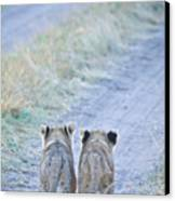 Lion Cubs Walking Together In Masai Mara Canvas Print by Mehmed Zelkovic