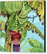Little Blue Quaker Canvas Print by Danielle  Perry