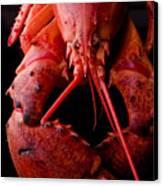 Lobster Canvas Print by Jim DeLillo