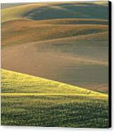 Lone Tree In The Palouse  Canvas Print by Sandra Bronstein