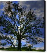Lonely Tree Canvas Print by Kevin Hill