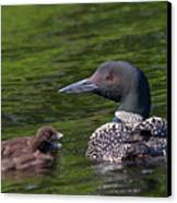 Loon Afternoon Canvas Print by Peter Gray