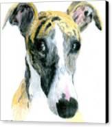 Love That Whippet Canvas Print by Ann Radley