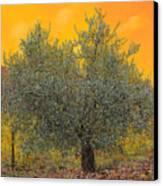 L'ulivo Tra Le Vigne Canvas Print by Guido Borelli