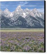 Lupine And Grand Tetons Canvas Print by Sandra Bronstein