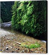 Lush Fern Canyon Canvas Print by Pierre Leclerc Photography