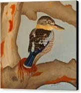 Magnificent Blue-winged Kookaburra Canvas Print by Brian Leverton