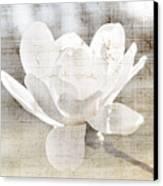 Magnolia Flower Canvas Print by Elena Elisseeva