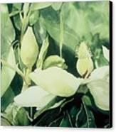 Magnolium Opus Canvas Print by Elizabeth Carr