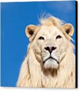 Majestic White Lion Canvas Print by Sarah Cheriton-Jones