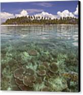 Malaysia, Mabul Island Canvas Print by Dave Fleetham - Printscapes