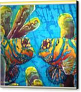 Mandarinfish- Bordered Canvas Print by Sue Duda
