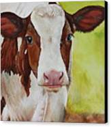 Marigold Canvas Print by Laura Carey