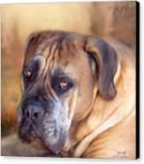Mastiff Portrait Canvas Print by Carol Cavalaris
