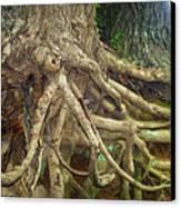 Medusa Canvas Print by Cricket Hackmann