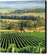 Misty Morning In Yarra Valley Vineyards Near Healesville, Victoria, Australia Canvas Print by Peter Walton Photography