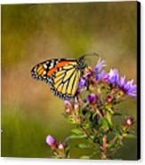 Monarch Butterfly In The Afternoon Sun Canvas Print by James Steele