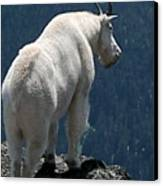 Mountain Goat 2 Canvas Print by Sean Griffin