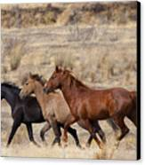 Mustang Trio Canvas Print by Mike  Dawson