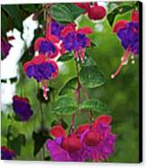 Nan's Fushia Canvas Print by Gwyn Newcombe