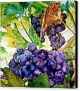 Napa Harvest Canvas Print by Lance Gebhardt
