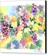 Napa Valley Morning Canvas Print by Deborah Ronglien