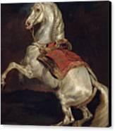 Napoleon's Stallion Tamerlan Canvas Print by Theodore Gericault