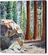 National Park Sequoia Canvas Print by Irina Sztukowski