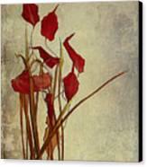 Nature Morte Du Moment Canvas Print by Aimelle