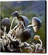 Nature Canvas Print by Avalon Fine Art Photography