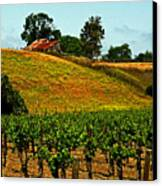 New Vineyard Canvas Print by Gary Brandes