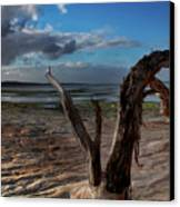 Ode To The Estuary Canvas Print by Kym Clarke