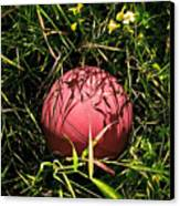 Old Basketball In The Grass Canvas Print by Robert Sawin