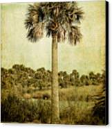 Old Florida Palm Canvas Print by Rich Leighton