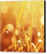 Orange Awakening Canvas Print by Aimelle