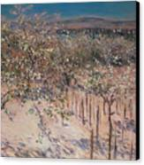 Orchard With Flowering Apple Trees Canvas Print by Gustave Caillebotte