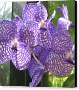 Orchid Canvas Print by Darren Stein