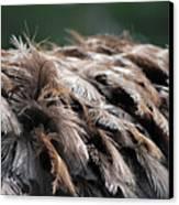 Ostrich Feathers Canvas Print by Teresa Blanton