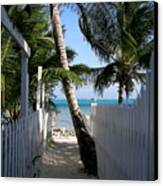 Palm Alley Canvas Print by Karen Wiles