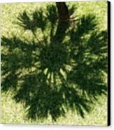 Palm Shadow Canvas Print by Richard Mansfield