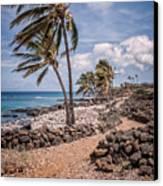 Palms At Lapakahi Canvas Print by Al Andersen