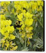 Panorama Hills Bluffs Bee Painting Canvas Print by Donna Munro