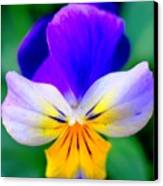 Pansy Canvas Print by Kathleen Struckle