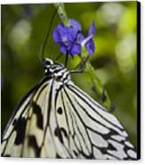 Paper Kite Butterfly Canvas Print by Heather Applegate